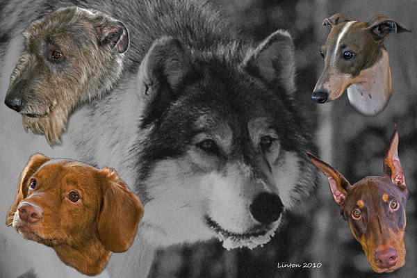 Photograph - From The Grey Wolf by Larry Linton