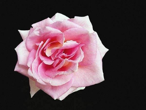 Digital Art - From The Rose Garden by Dennis Buckman