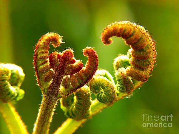 Photograph - Frond Fern by Minolta D