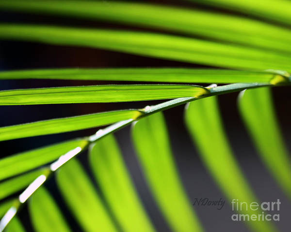 Photograph - Frond Geometry by Natalie Dowty