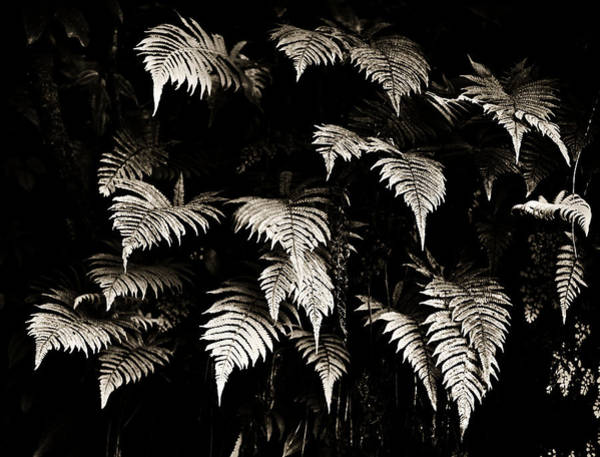 Photograph - Fronds by Marilyn Hunt