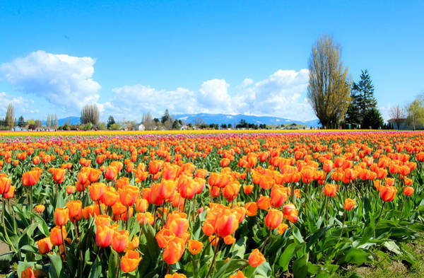 Photograph - Front Row In Orange by E Faithe Lester