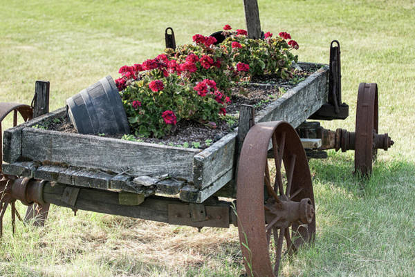 Photograph - Front Yard Decor by Nick Mares
