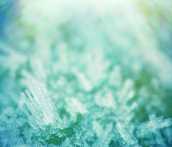 Icicles Wall Art - Photograph - Frost Crystals by Wim Lanclus