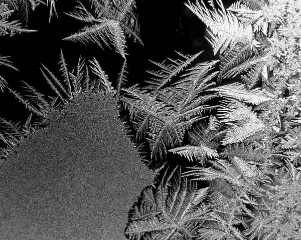 Photograph - Frost Feathers by Polly Castor