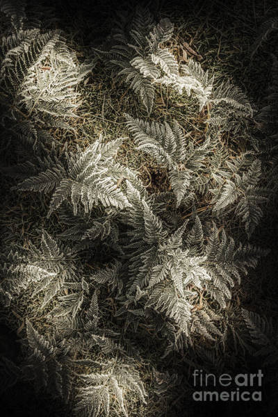 Icy Leaves Wall Art - Photograph - Frost Ferns by Jorgo Photography - Wall Art Gallery