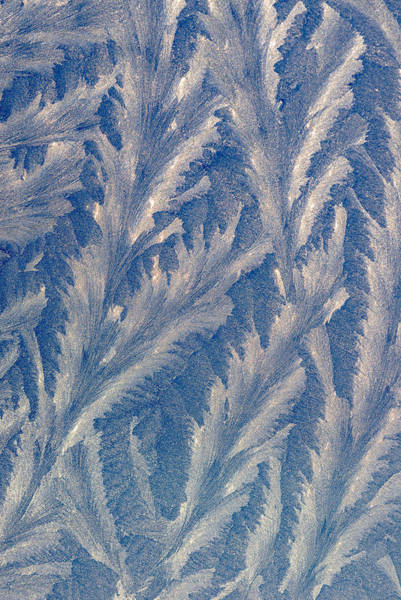 Photograph - Frost Fronds by Robert Potts