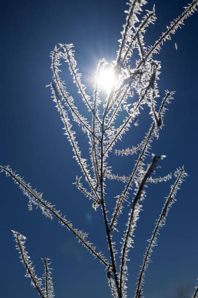 Photograph - Frost Ice Crystals by Frank Wilson