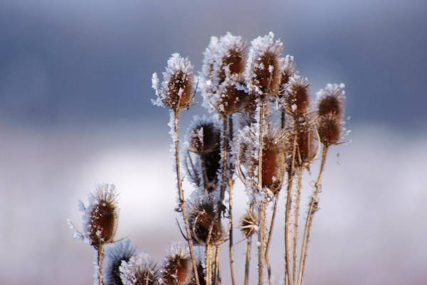 Frost In The Morning Art Print