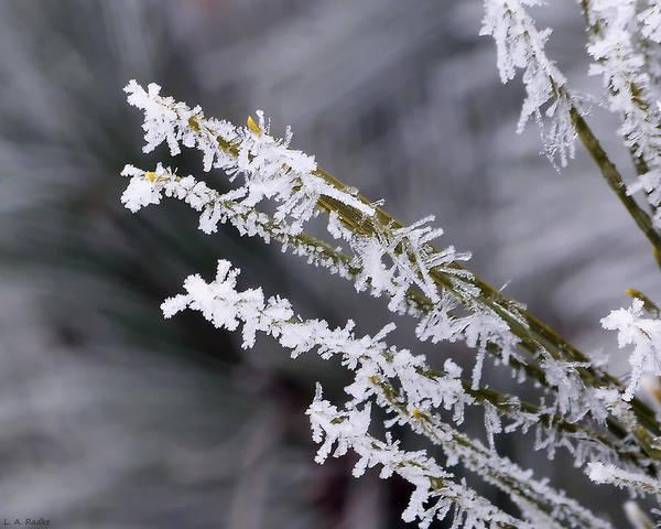 Photograph - Frost by Lauren Radke