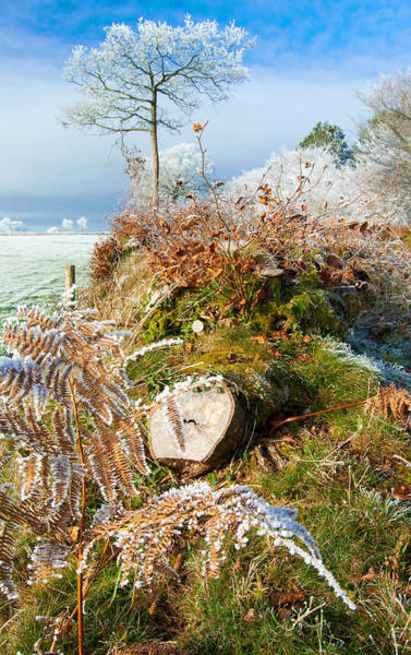 Fern Frost Photograph - Frost On The Hedgerows by Rob Hawkins
