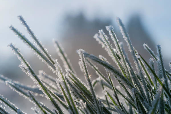 Photograph - Frost On The Lawn by Robert Potts