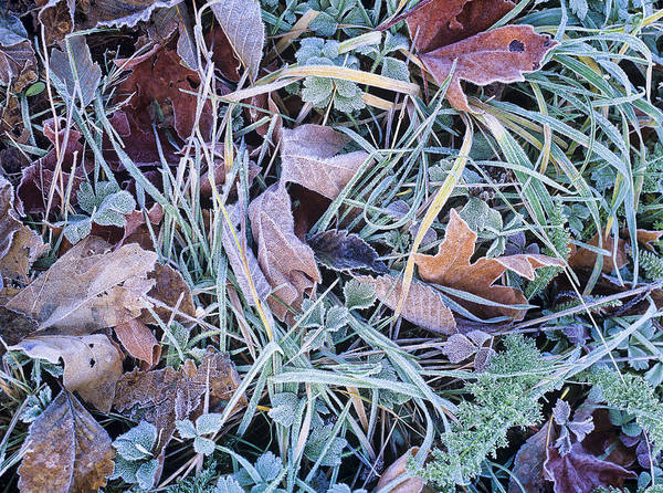 Photograph - Frost On The Leaves And Grass by Robert Potts