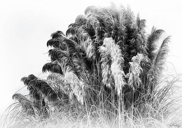 Art Print featuring the photograph Frost On The Pampas Grass by Dee Browning