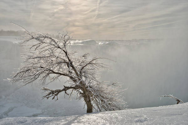 Photograph - Frostbite by Sebastien Coursol