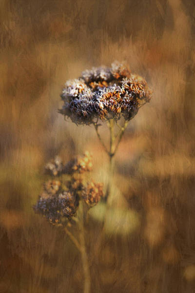Photograph - Frosted Bloom by Robert FERD Frank