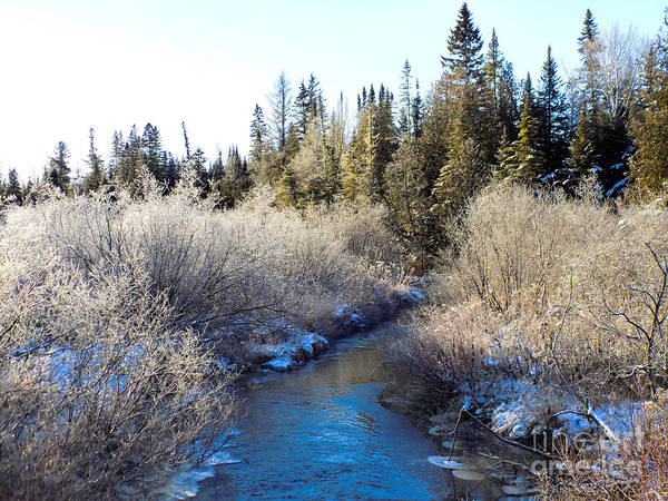 Aroostook Photograph - Frosted Brook by William Tasker