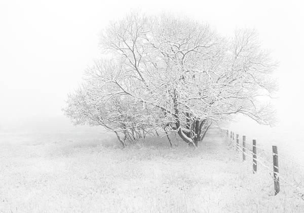 Hoar Photograph - Frosted by Dan Jurak