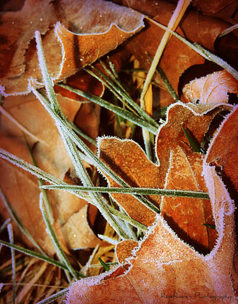 Rader Photograph - Frosted Edges by Roe Rader