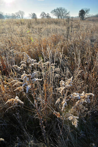 Photograph - Frosted Fall Wildflowers At Prairieview Education Center by Ray Mathis