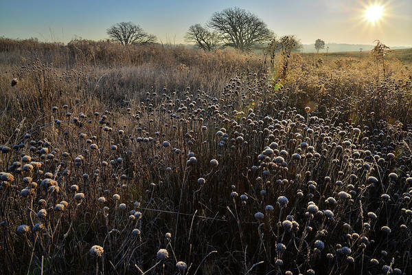 Photograph - Frosted Fall Wildflowers At Prairieview by Ray Mathis