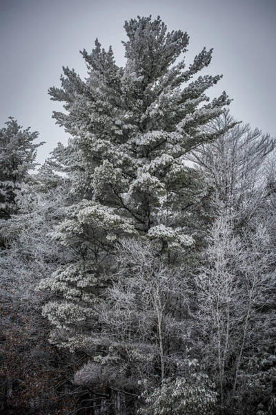 Wall Art - Photograph - Frosted Forest by Paul Freidlund
