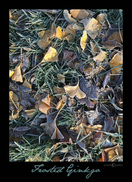 Photograph - Frosted Ginkgo by Tim Nyberg