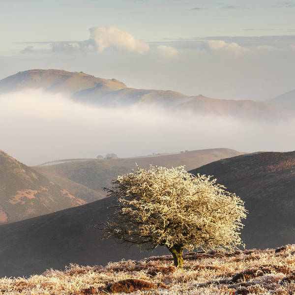 Church Stretton Photograph - Frosted Hawthorn by Richard Greswell
