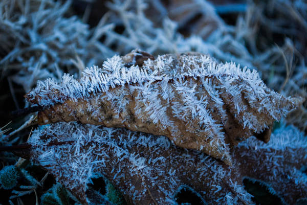 Photograph - Frosted Moonlight by Parker Cunningham