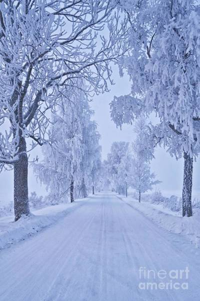 Salo Wall Art - Photograph - Frosted Trees by Veikko Suikkanen