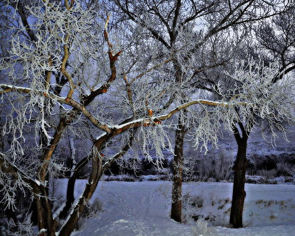 Wall Art - Photograph - Frosted Twilight by Tru Waters