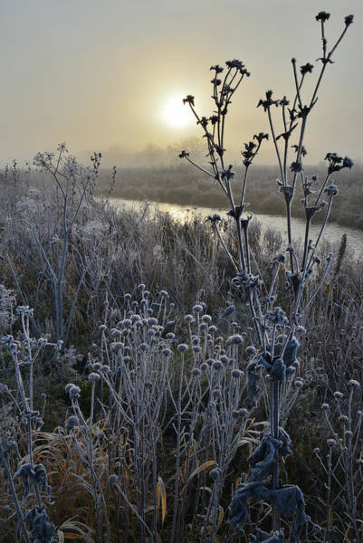 Photograph - Frosted Wildflowers On Nippersink Creek On A Fall Morning by Ray Mathis