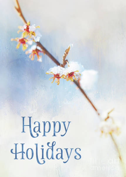 Photograph - Frosted Witch Hazel Blossoms Holiday Card by Anita Pollak