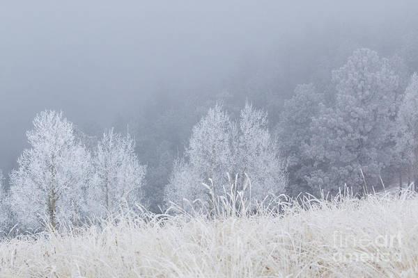 Photograph - Frosty Aspen Trees On Bald Mountain by Steve Krull