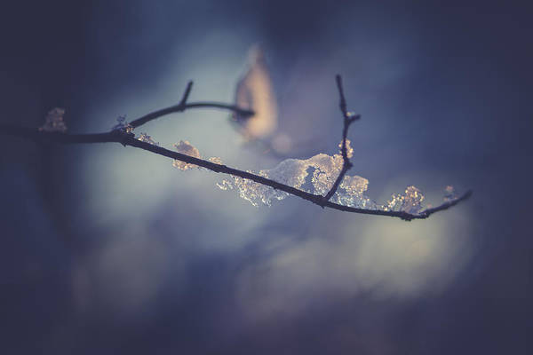 Wall Art - Photograph - Frosty Branch by Shane Holsclaw