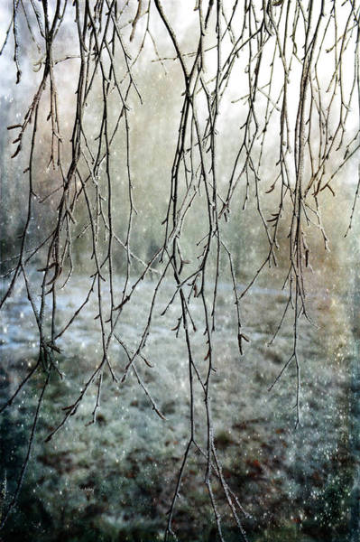 Photograph - Frosty Decor by Randi Grace Nilsberg