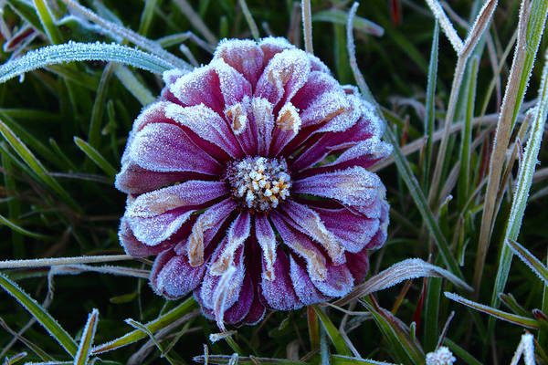 Wall Art - Photograph - Frosty Glory 16 by Kevin Wheeler