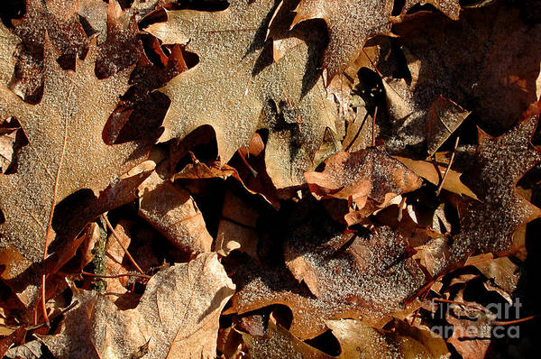 Photograph - Frosty Leaves by Kathi Shotwell
