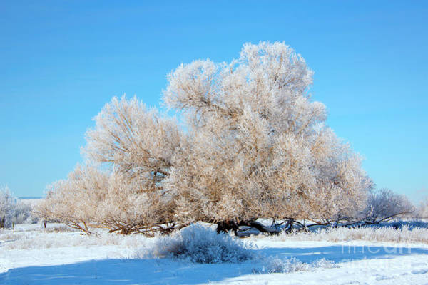 Hoar Photograph - Frosty  by Mike Dawson