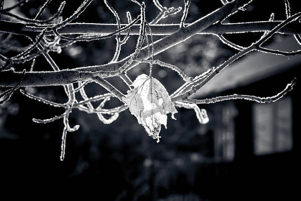 Icy Leaves Wall Art - Photograph - Frosty Morn  by Maggie Terlecki