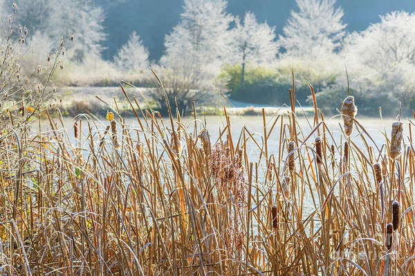 Photograph - Frosty Morning At The Lake by Thomas R Fletcher