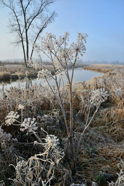 Photograph - Frosty Morning On Nippersink Creek In Glacial Park In Mchenry County by Ray Mathis