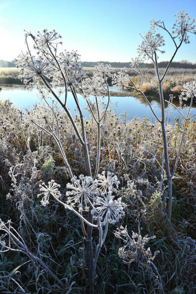 Photograph - Frosty Nippersink Creek In Glacial Park by Ray Mathis