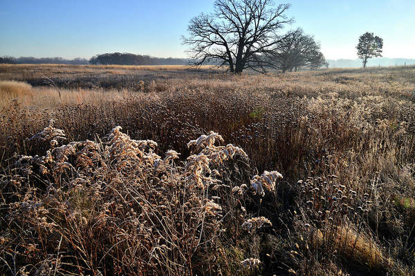 Photograph - Frosty Prairie At Prairieview by Ray Mathis