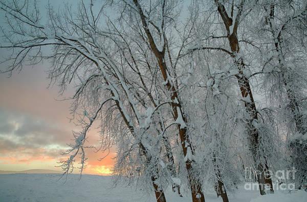 Wall Art - Photograph - Frosty Sunrise by Idaho Scenic Images Linda Lantzy