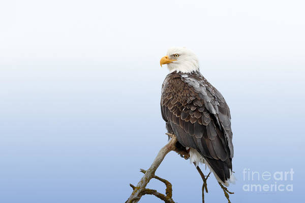 Photograph - Frosty The Eagle by Beve Brown-Clark Photography