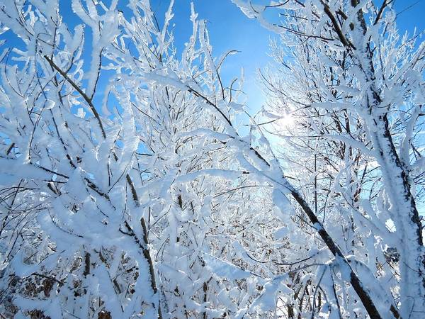 Arapahoe County Wall Art - Photograph - Frosty Trees by Connor Beekman