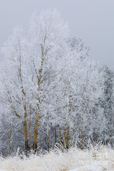 Photograph - Frosty Trees For Thanksgiving On Bald Mountain by Steve Krull