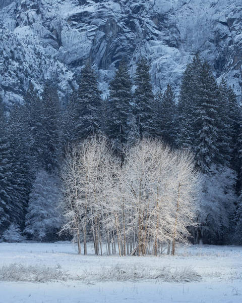 Wall Art - Photograph - Frosty Trees In Yosemite Valley On A Cold Winter Morn by Bridget Calip
