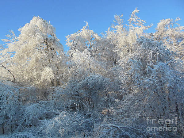 Photograph - Frosty Trees by Rockin Docks Deluxephotos